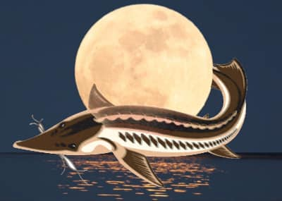 Full moon with fish image