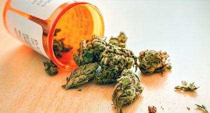 buds of marijuana spilling out of a prescription bottle